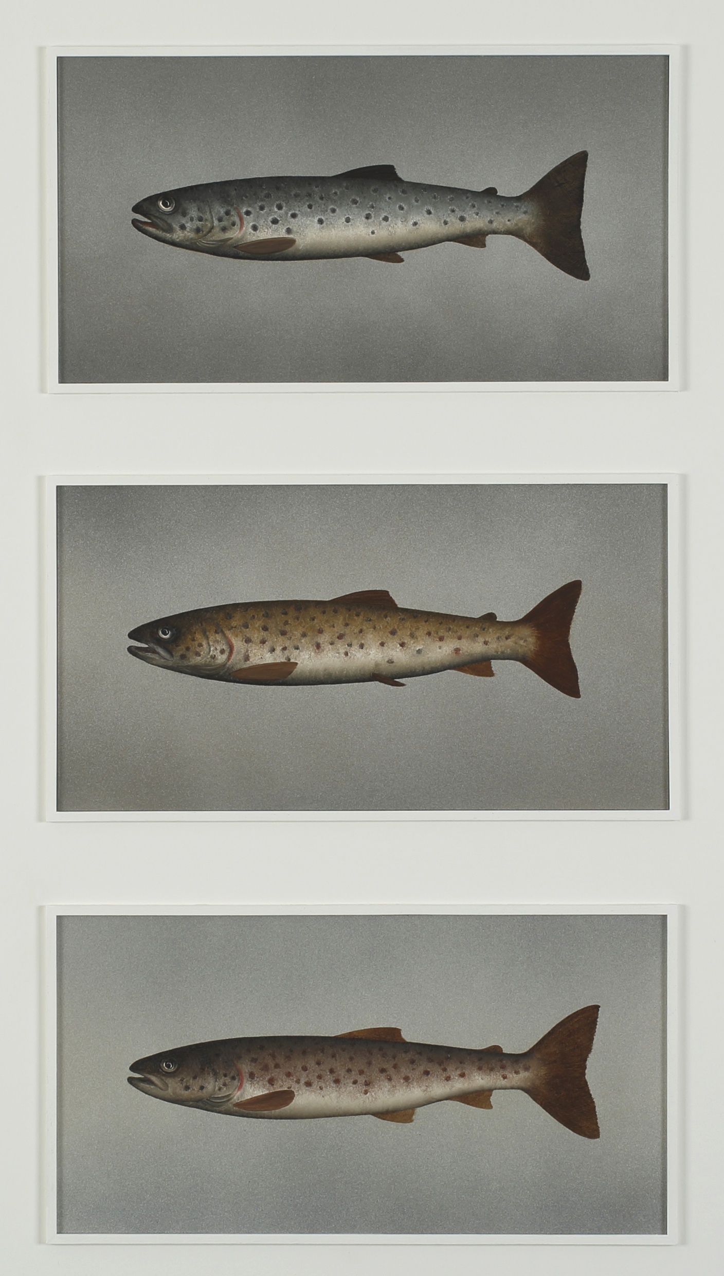 Title: Brown Trout Variations Size: 79 x 39,5 cm Medium: Oil on panel Price: £3000