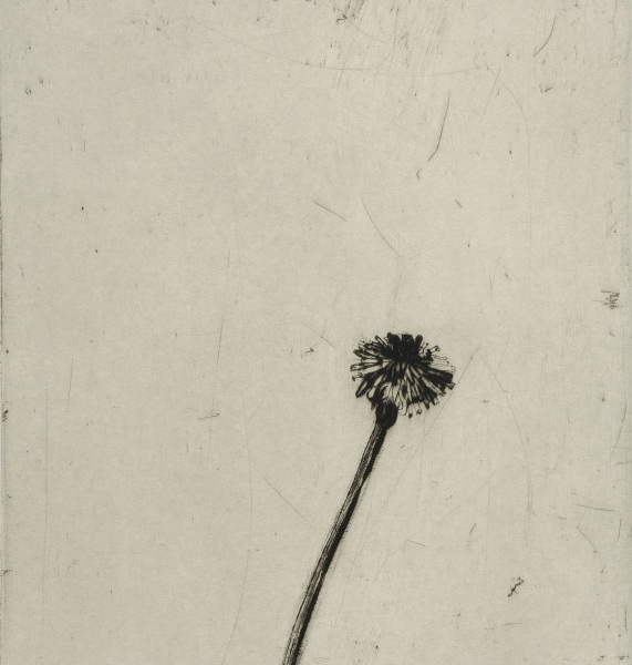 Title: Dandelion  Size: 30 x 24 cm  Medium: Drypoint and carborundum  Price: £580 unframed   Buy Now
