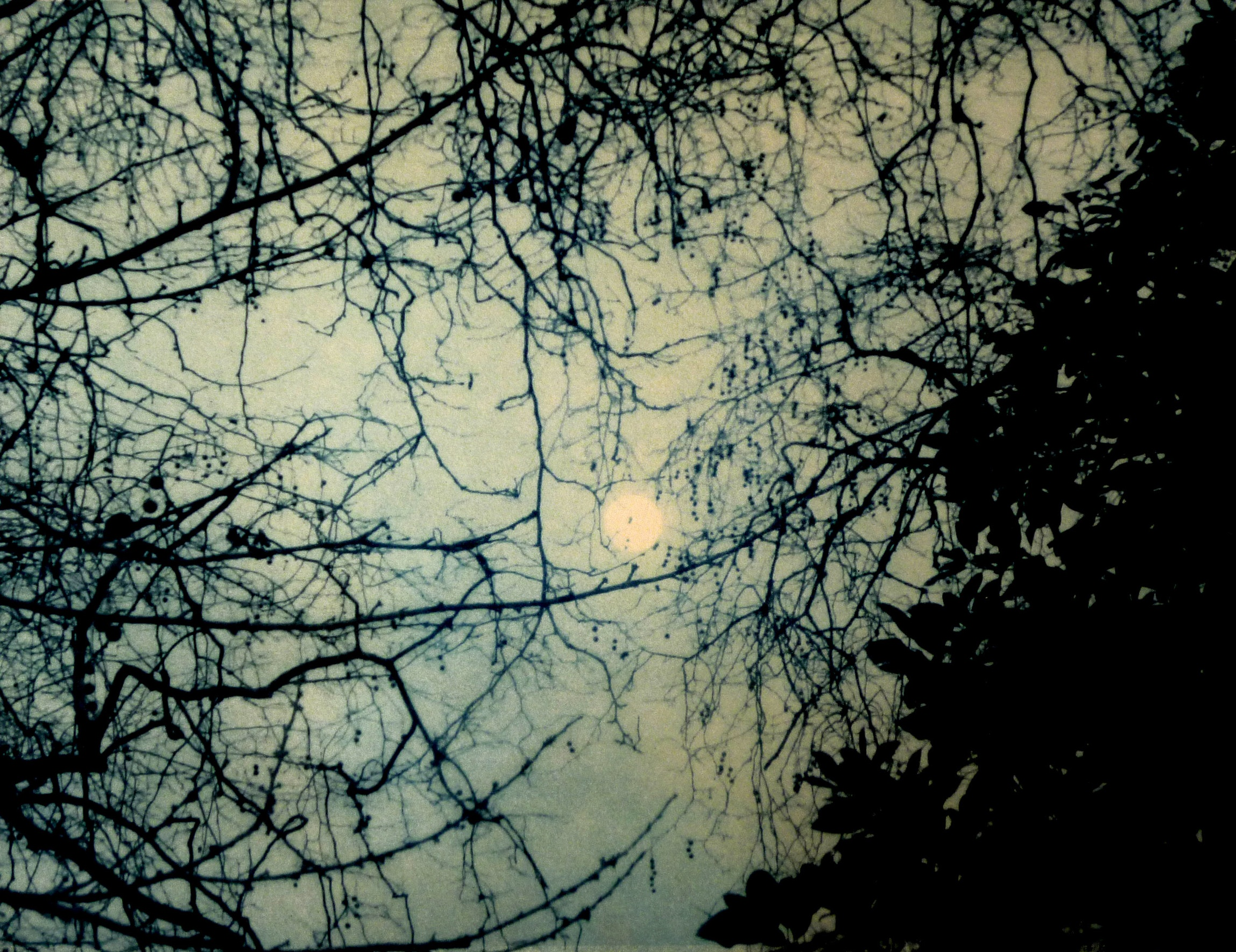 Title: Moon in Tree  Size: 28 x 36 cm  Medium: Solar etching (edition of 20)  Price: £240 fr   Buy Now