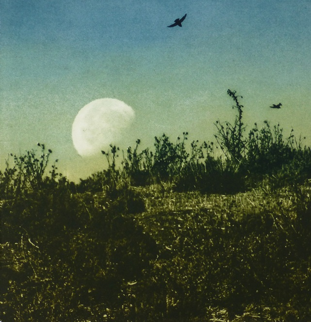 Title: Day Moon  Size: 18 x 18 cm  Medium: Solar etching (edition of 20)  Price: £180 fr   Buy Now