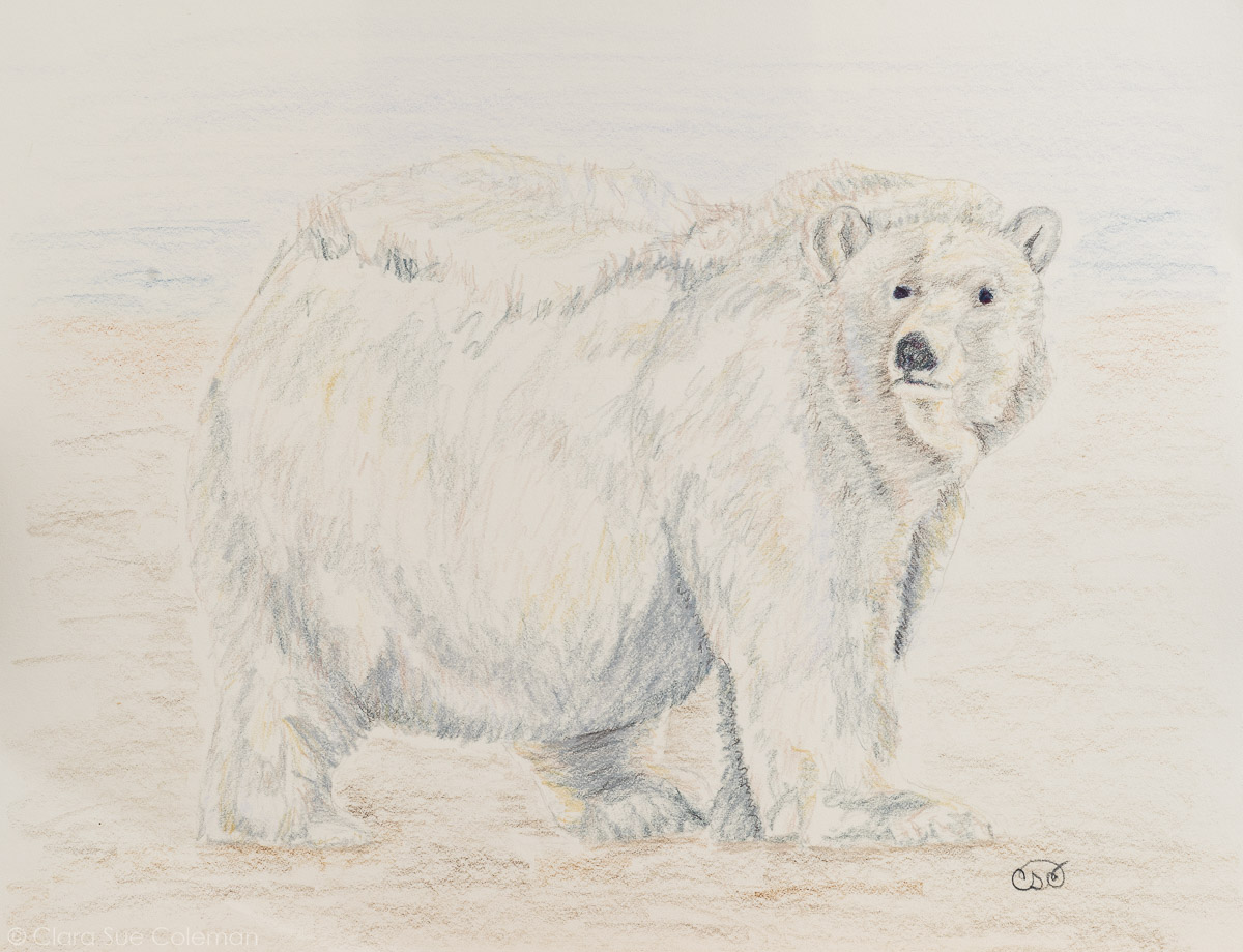 Study for Ursus Maritimus