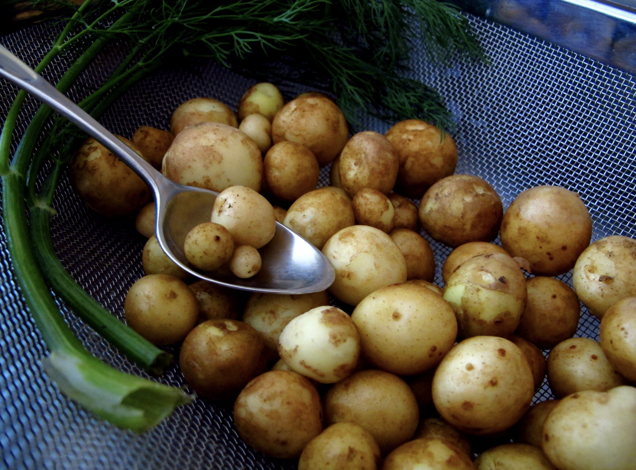 New Cheshire Potatoes now available, dug each morning