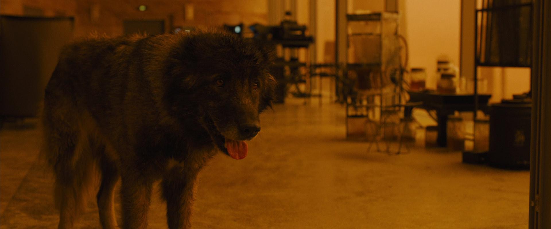 Deckard's dog in Blade  Runner 2049
