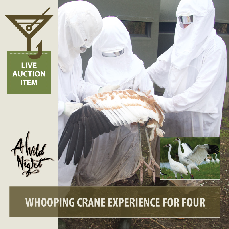 2019_Live_Whooping-Cranes.jpg