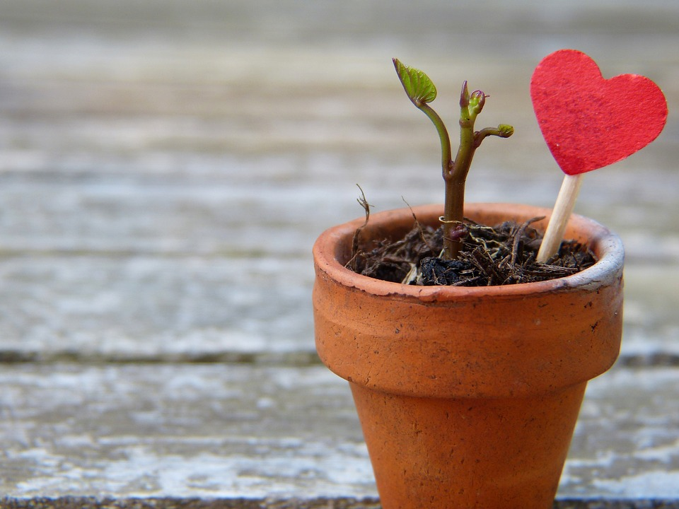 A New Sprout Grows in a clay flower pot on a wooden deck.