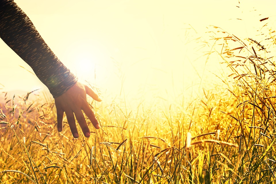 A hand reaches out and touches the tips of tall grass in a warm summer sunset.