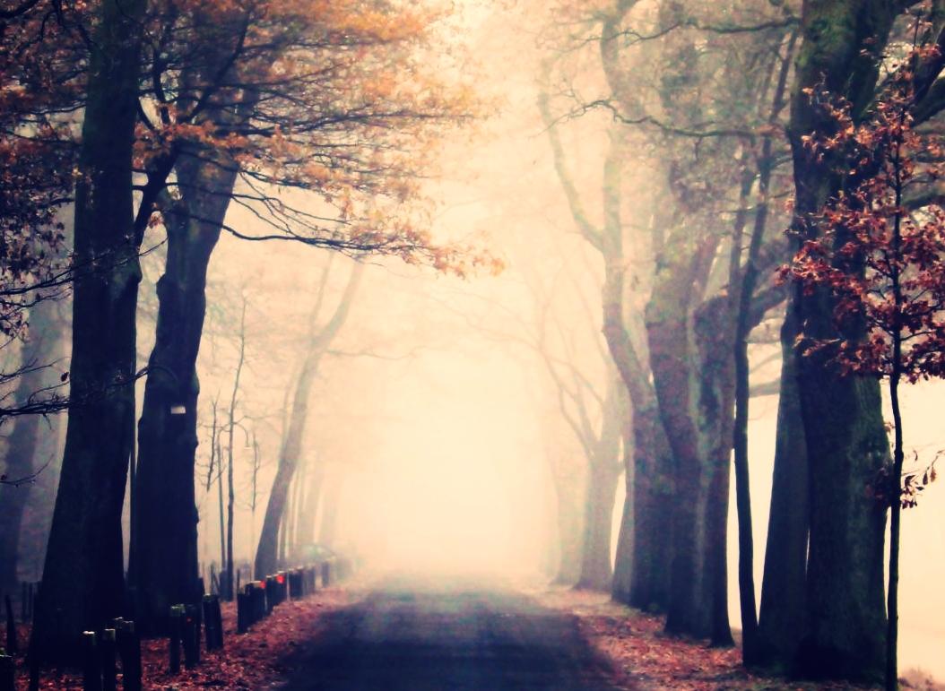 fog_park_nature_landscape_forest_trees_mood_cold-1164170.jpg!d.jpeg