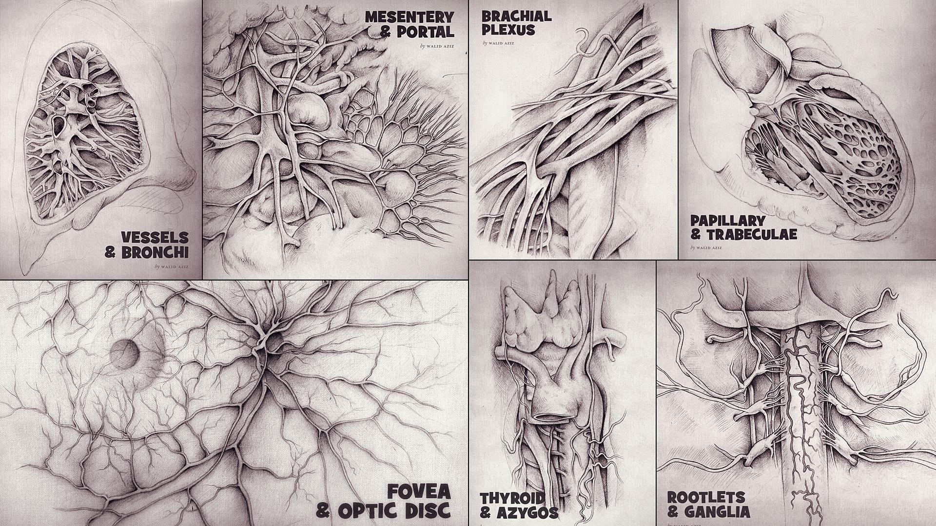 anatomySketches.jpg