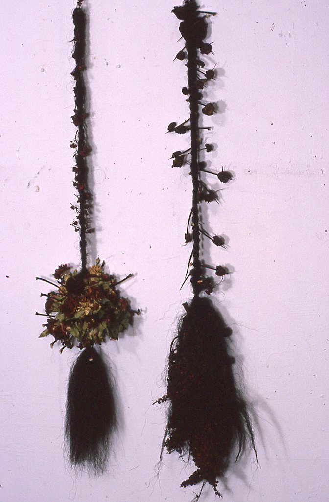 Thorns, Flowers, Seedpods, Hair