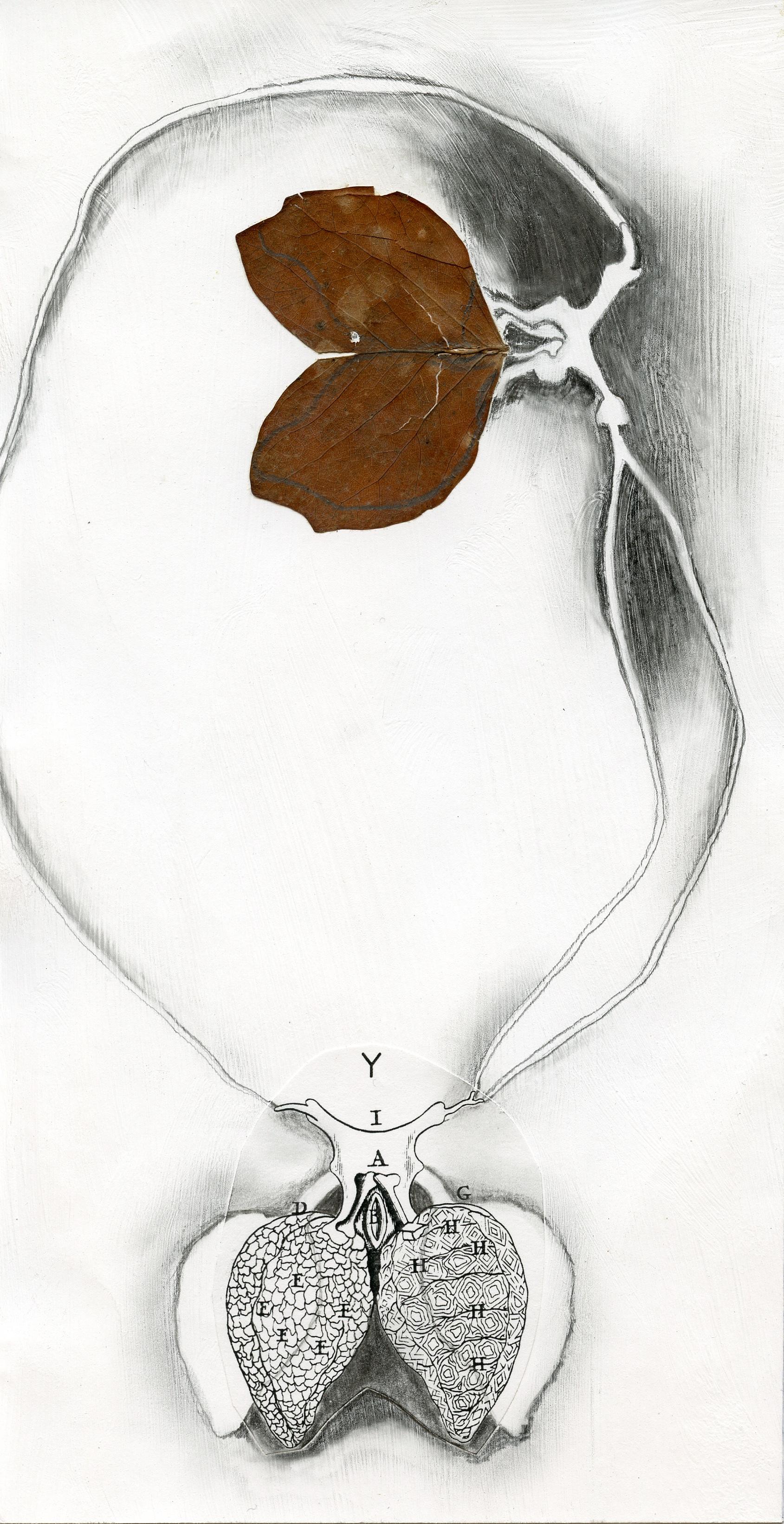 """Lung Leaf Collage 10"""" x 14"""""""