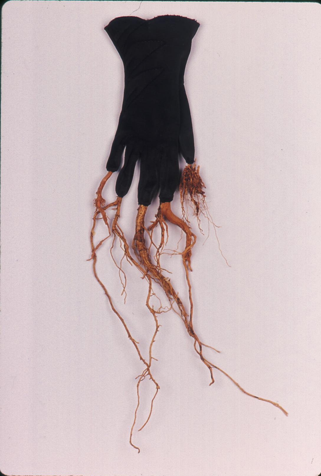 TUAT_glove_roots.jpg