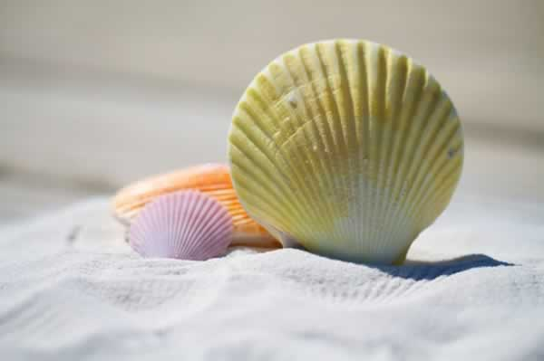 colorful seashells in the sand