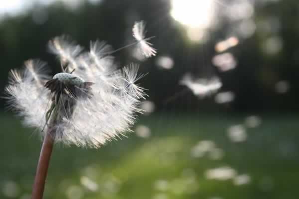 wind blowing a flower's petals