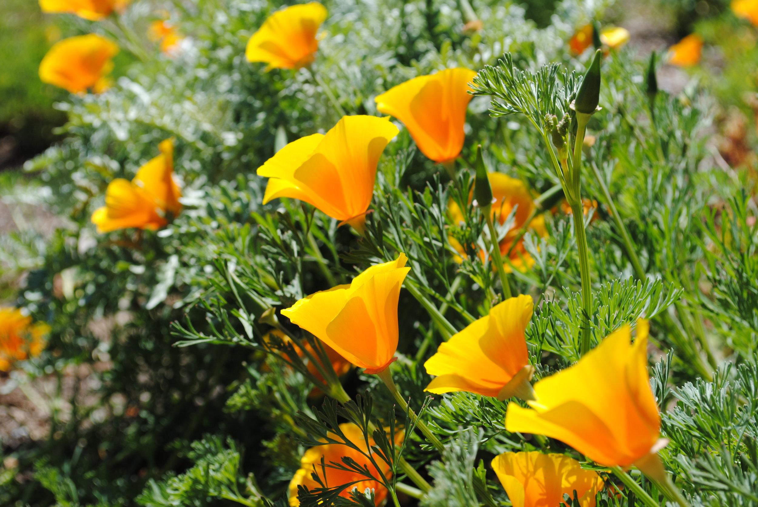 Build a garden. Grow a community. - The Emerson Avenue Community Garden