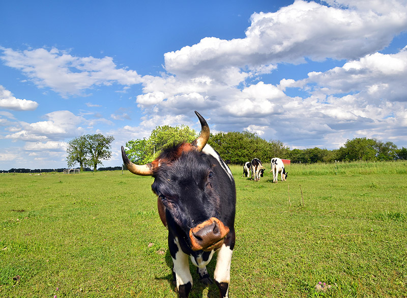 farm-marketing-photography-07b.jpg