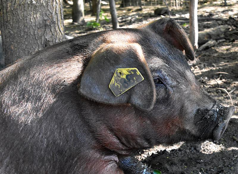 farm-marketing-photography-10.jpg