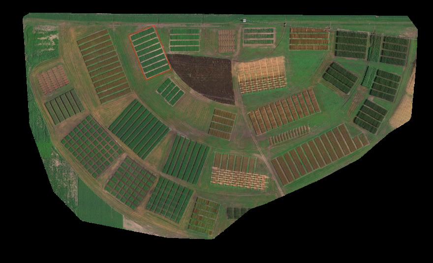 RGB-Bild des Plots (in Rot), wo die Forscher die Fungizidbehandlungen getestet haben.