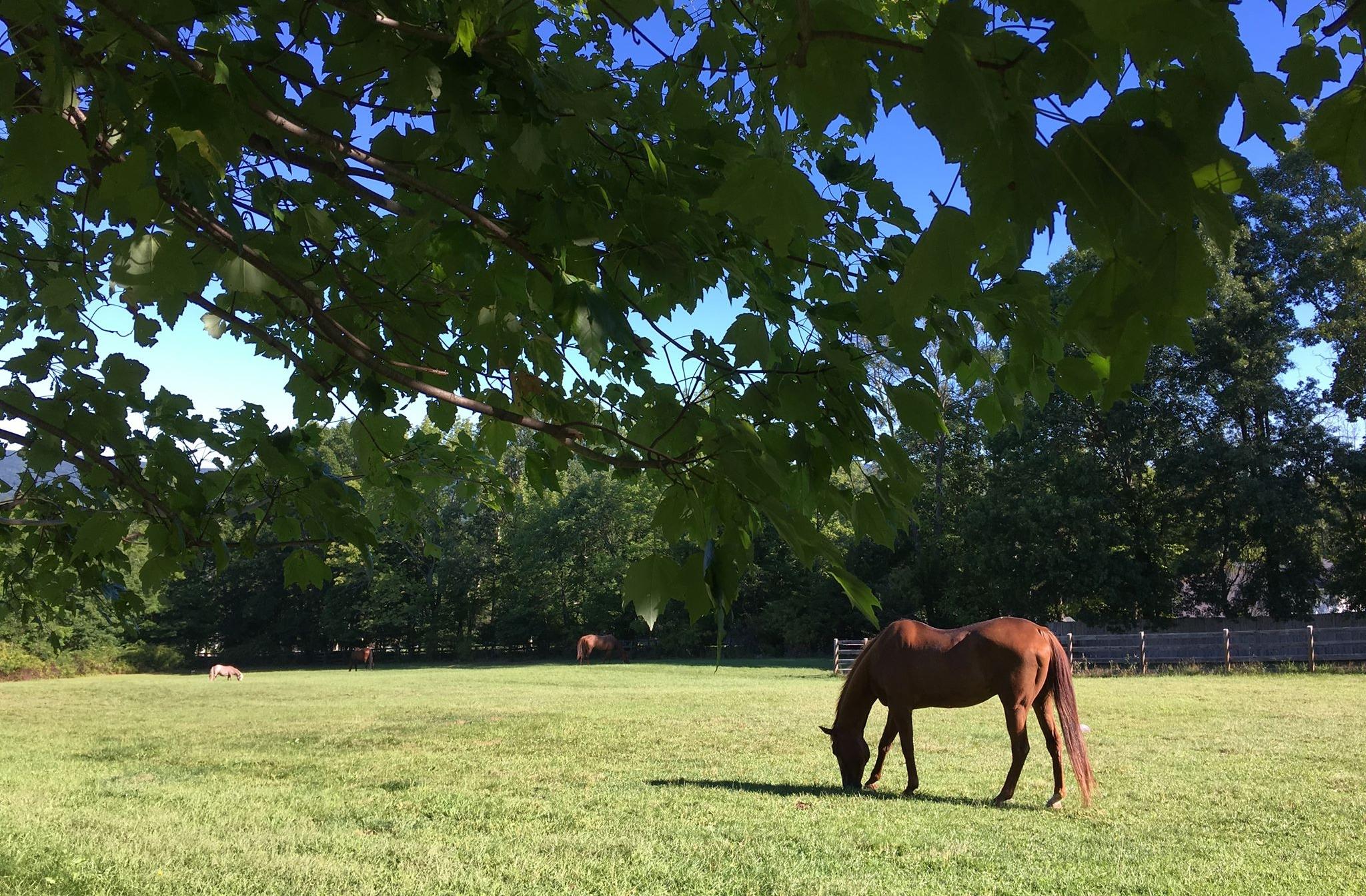 tree w horses.jpg