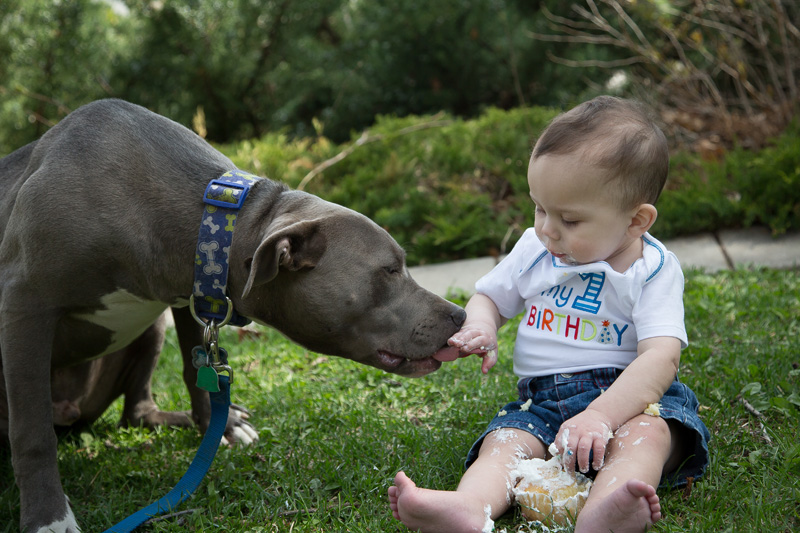 07-one-year-old-baby-puppy-birthday-smash-cake-a-boy-and-his-dog-sharing-melanie-mahonen-photography