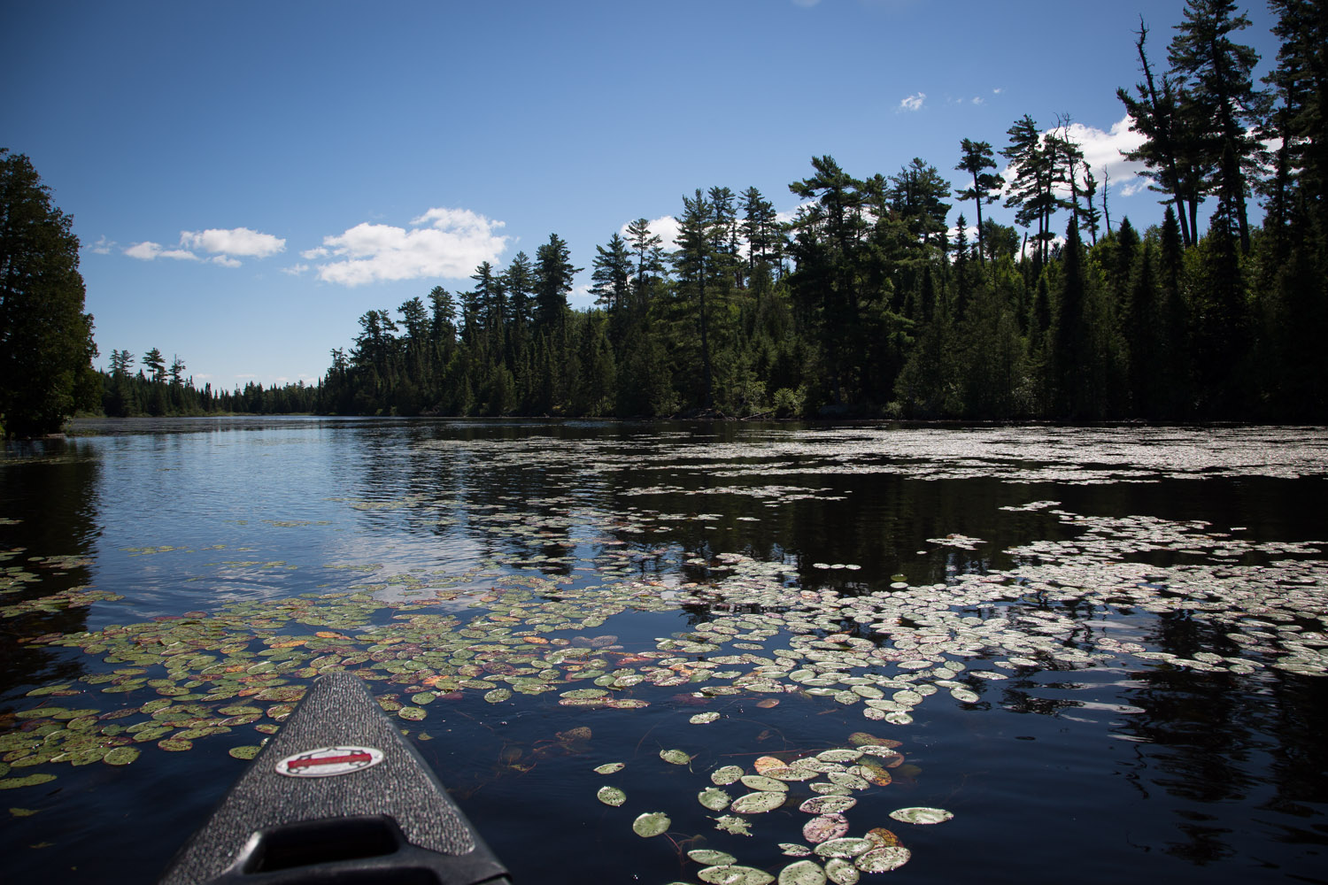 08-horseshoe-lake-canoe-northen-minnesota-old-town-lily-pads-looking-for-moose-mahonen-photography-bwca.jpg