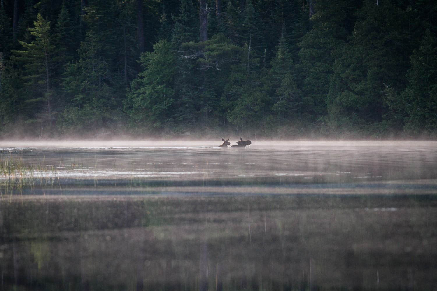 28-morsehoe-lake-moose-sighting-bwca-minnesota-boundary-waters-mahonen-photography.jpg