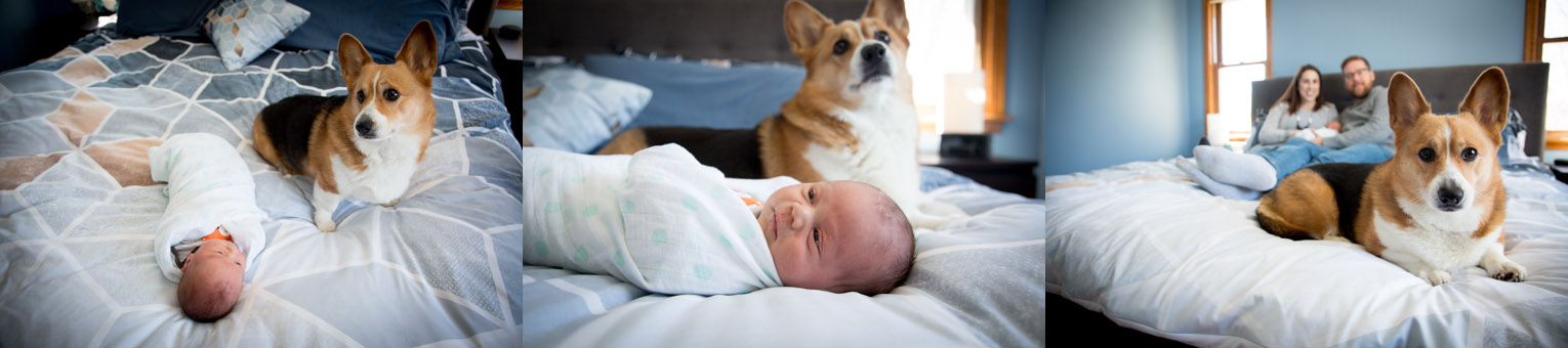 02-in-home-life-style-newborn-baby-boy-session-family-dog-original-baby-a-boy-and-his-dog-mahonen-photography.jpg