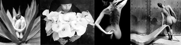 Kim Weston - Nude in Cactus, Calla Lilies, Nude & Fern, Sylvie's Lounge