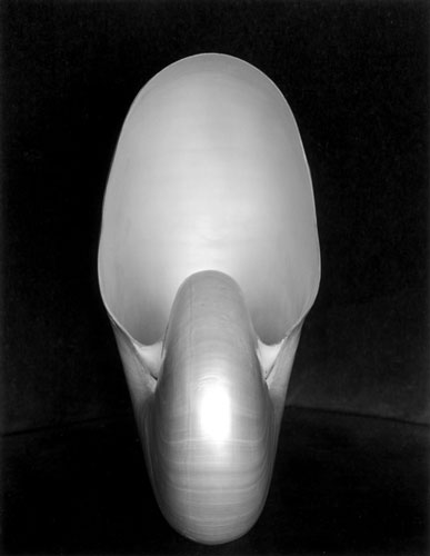 Shell 1S | Edward Weston 1927