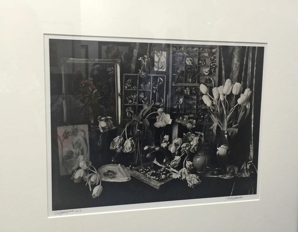 John Blakemore - Tulipmania No. 2