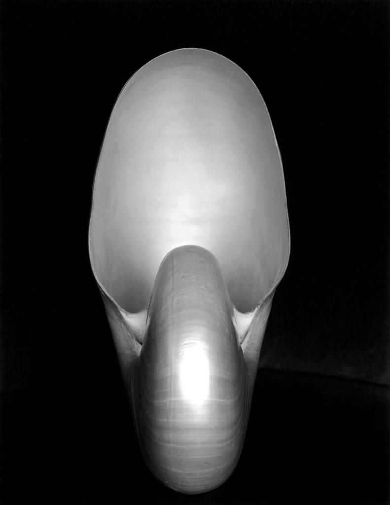 1S-Shell - Photograph by Edward Weston