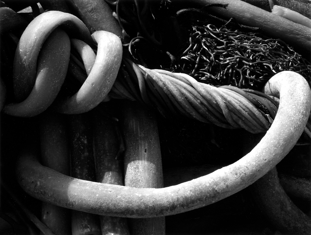 """3K Kelp"" by Edward Weston (1930)  Copyright © 1981 Center for Creative Photography, Arizona Board of Regents"