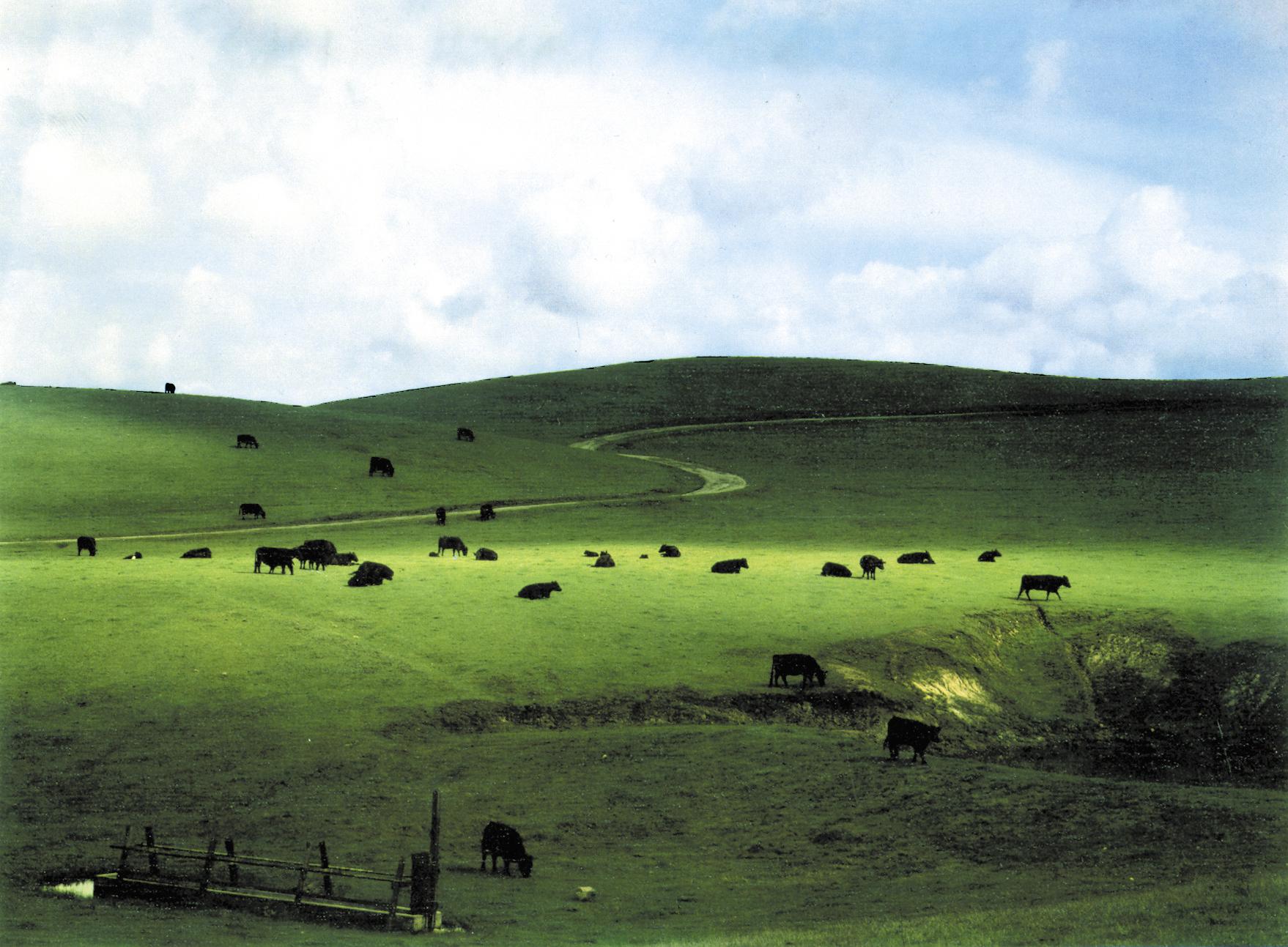Palo Corona Ranch, 1962