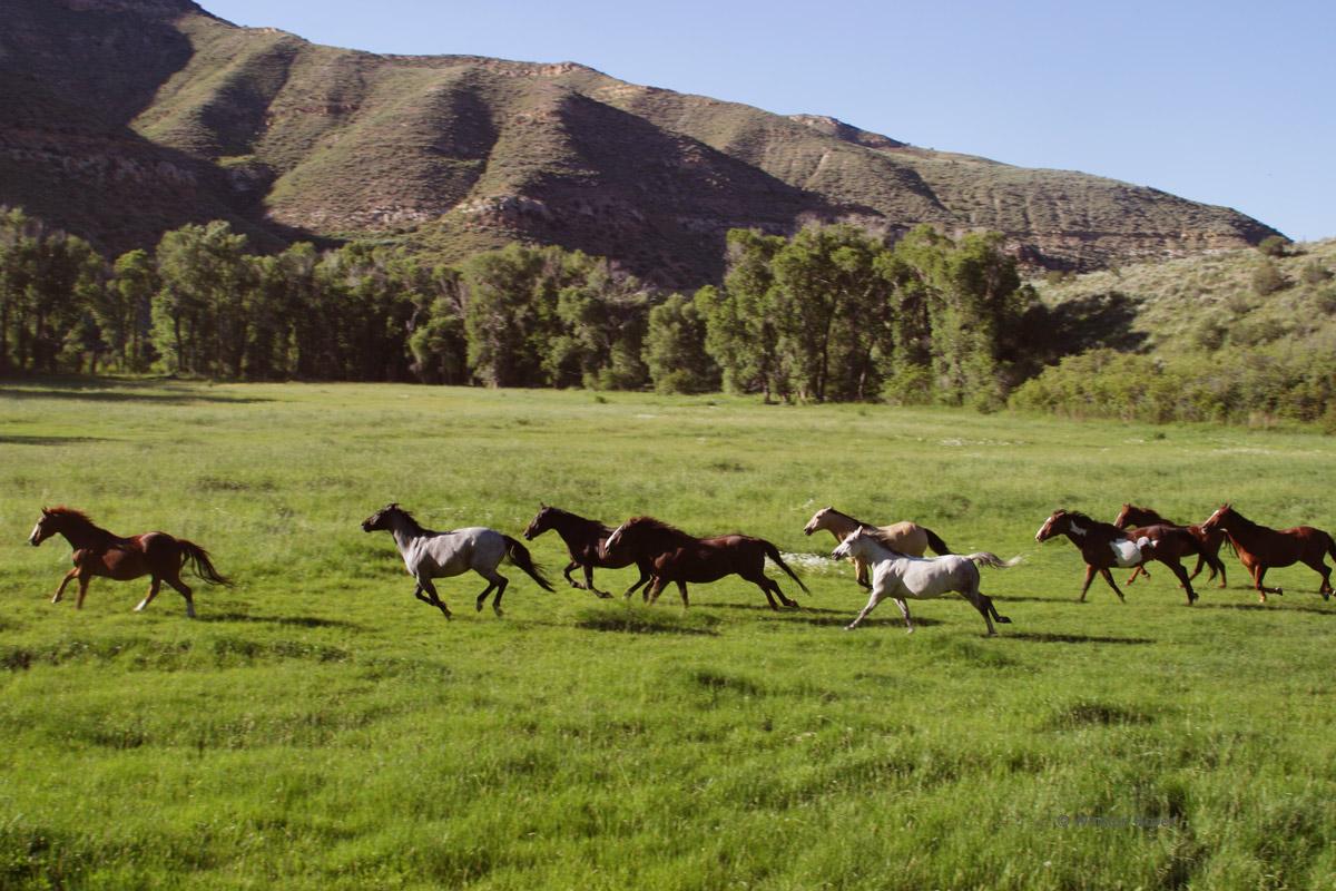 Horses-YL-Ranch.jpg