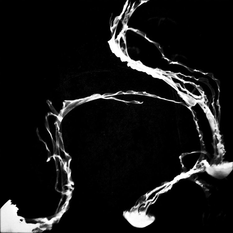Jellyfish,+2012.jpg