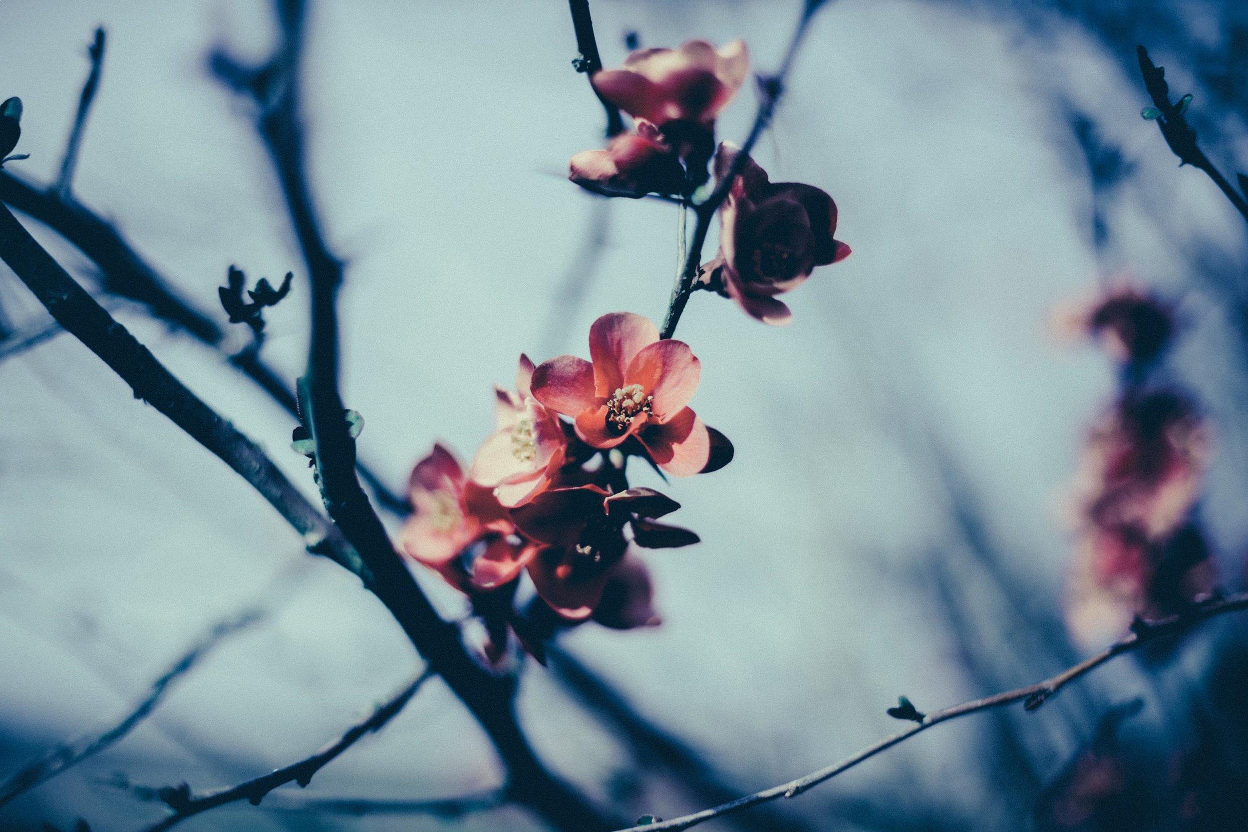 cold-spring.jpg