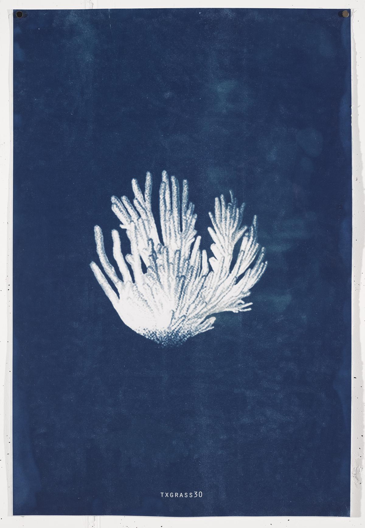 TXGRASS 2017 Unique cyanotype print on Frabriano No.5.90.4cm x 61cm