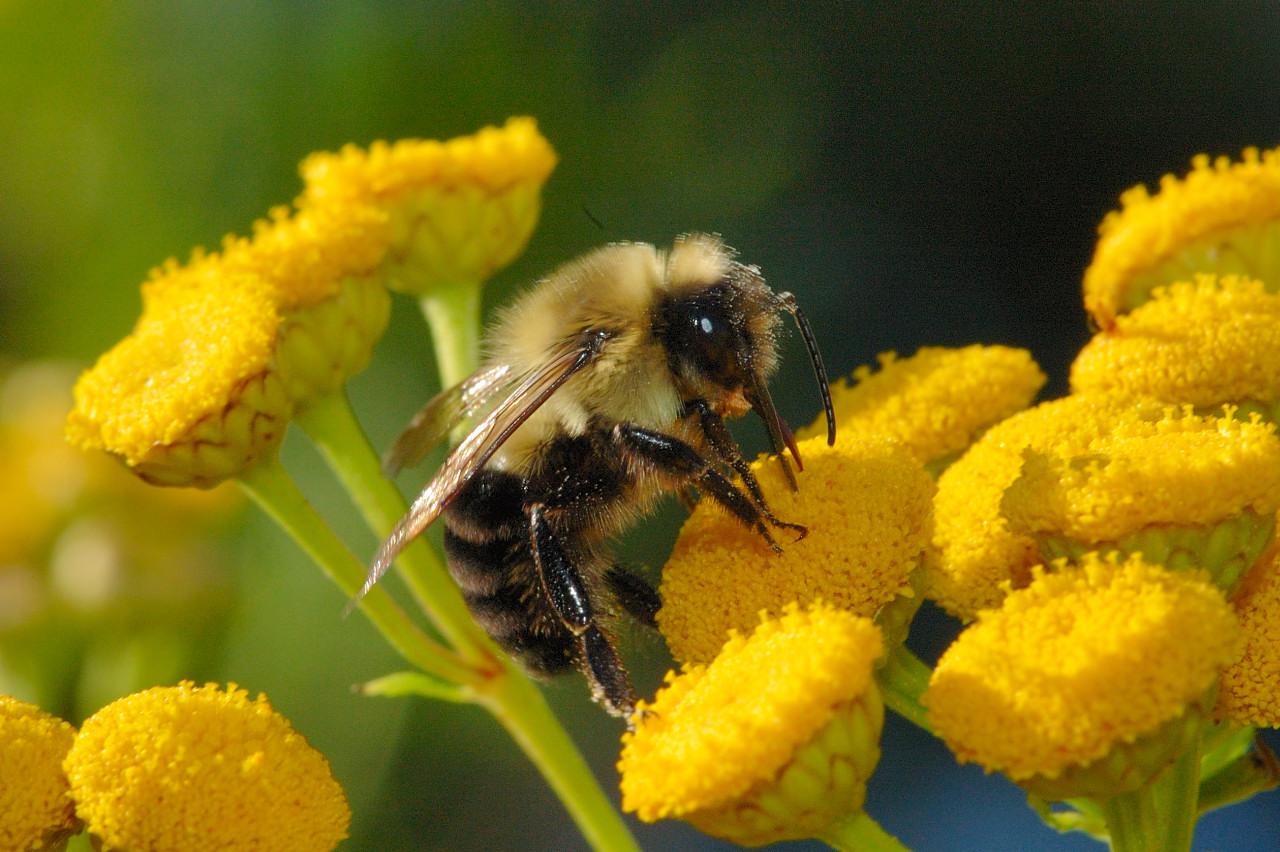 9am: get pollen, 901am:get pollen, 902am:get pollen, 903 am:get pollen....