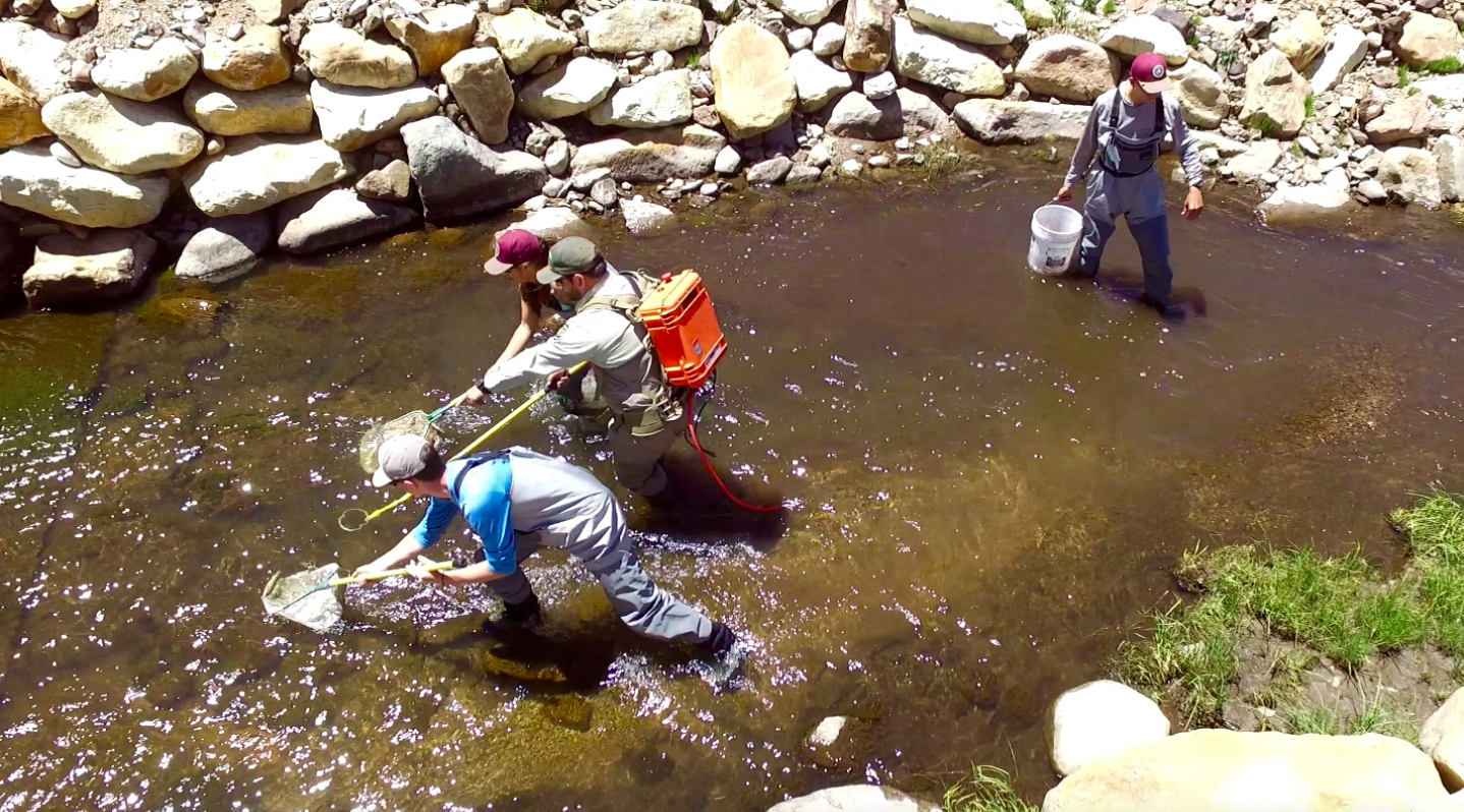 The Native Odyssey crew backpack shocking Rio Grande cutthroat trout in Comanche Creek.
