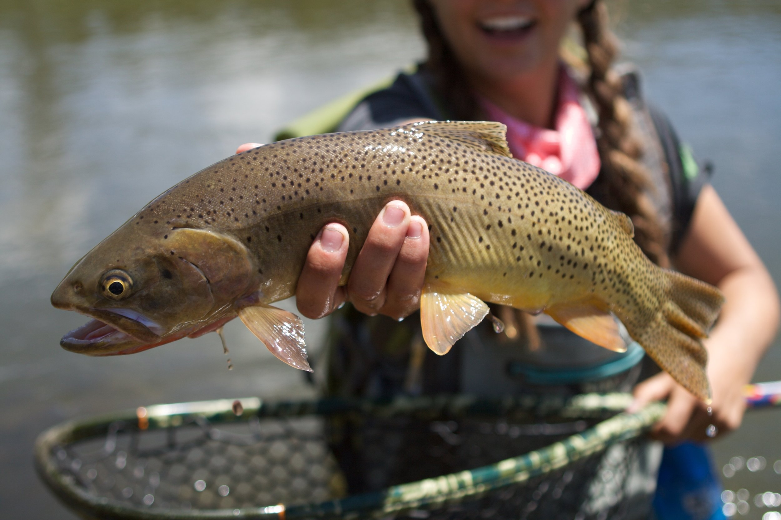 Heather with a healthy Yellowstone cutthroat trout.