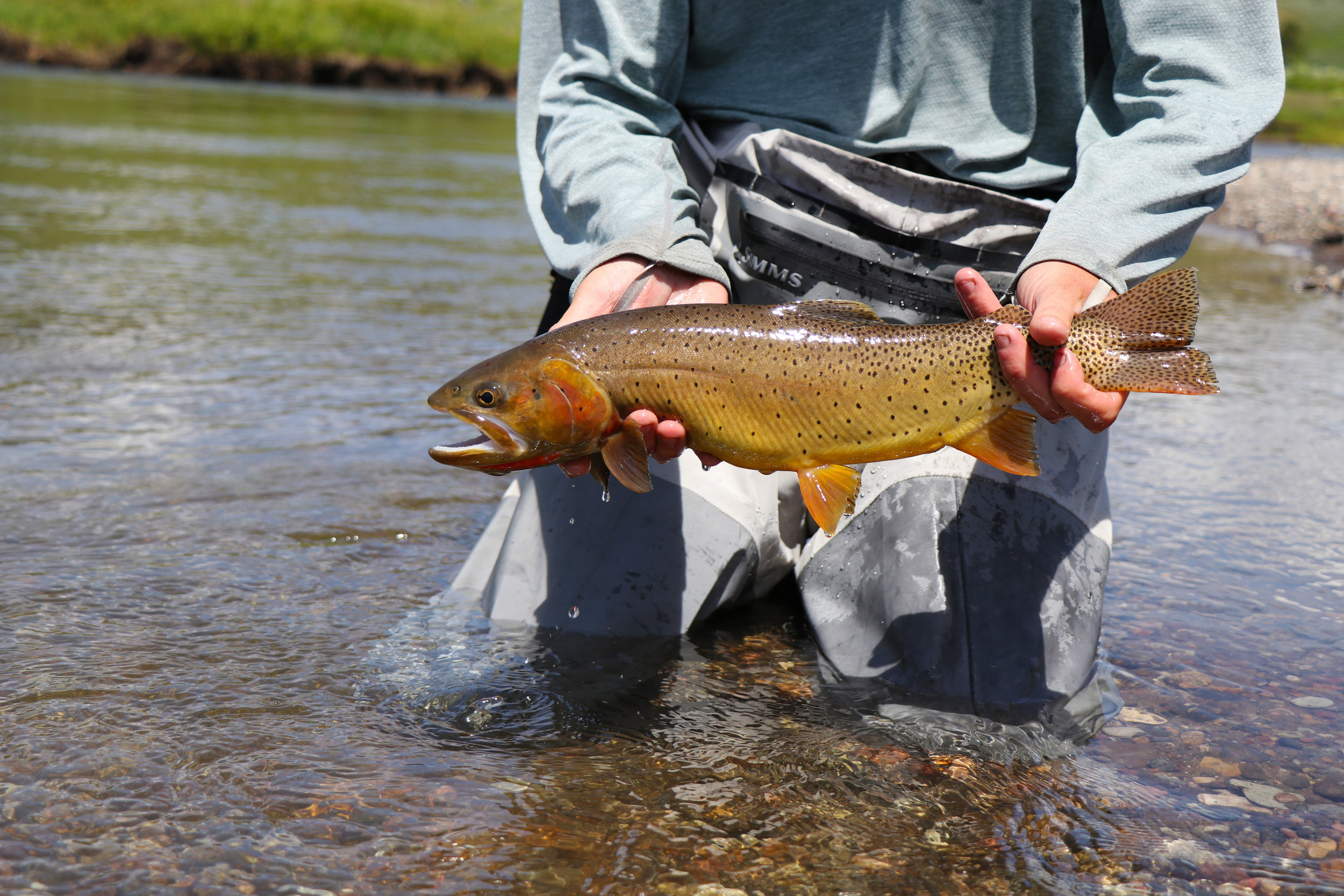 Matt holds a beautiful Slough Creek cutty, his first on day 2.