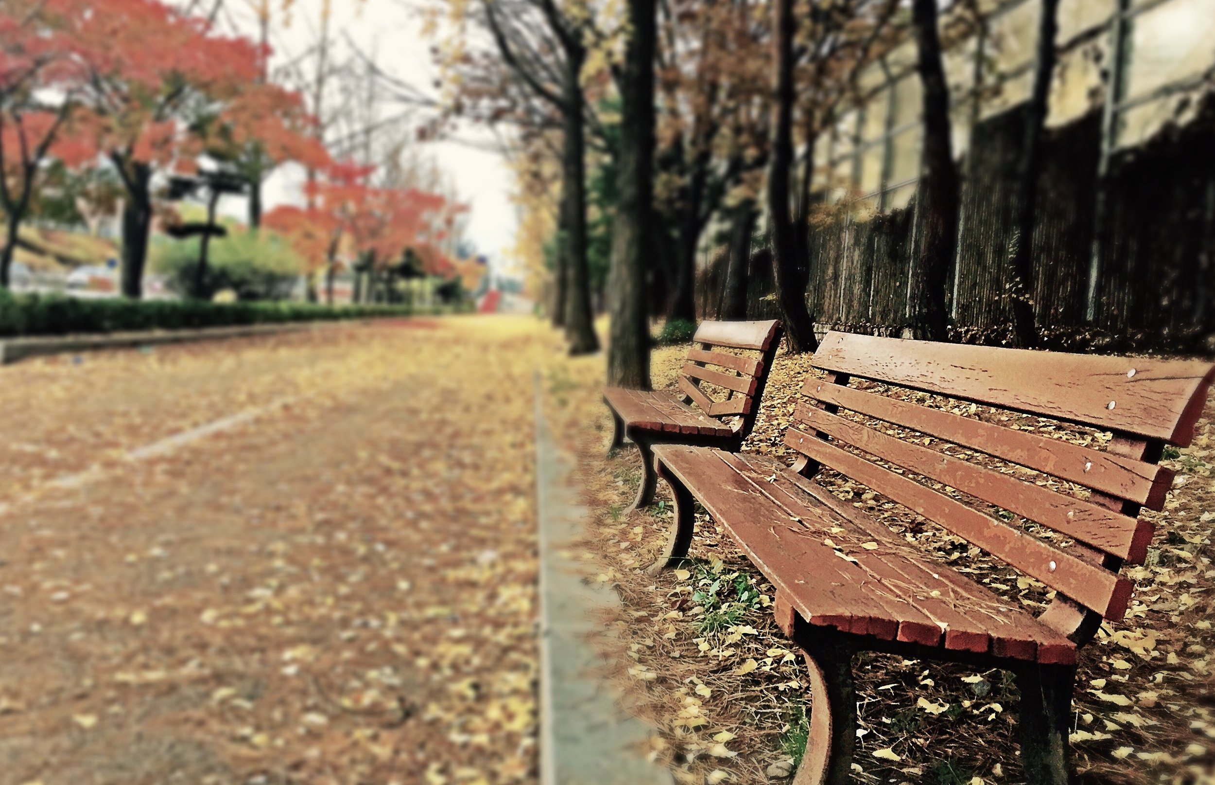 Fall Path.jpeg