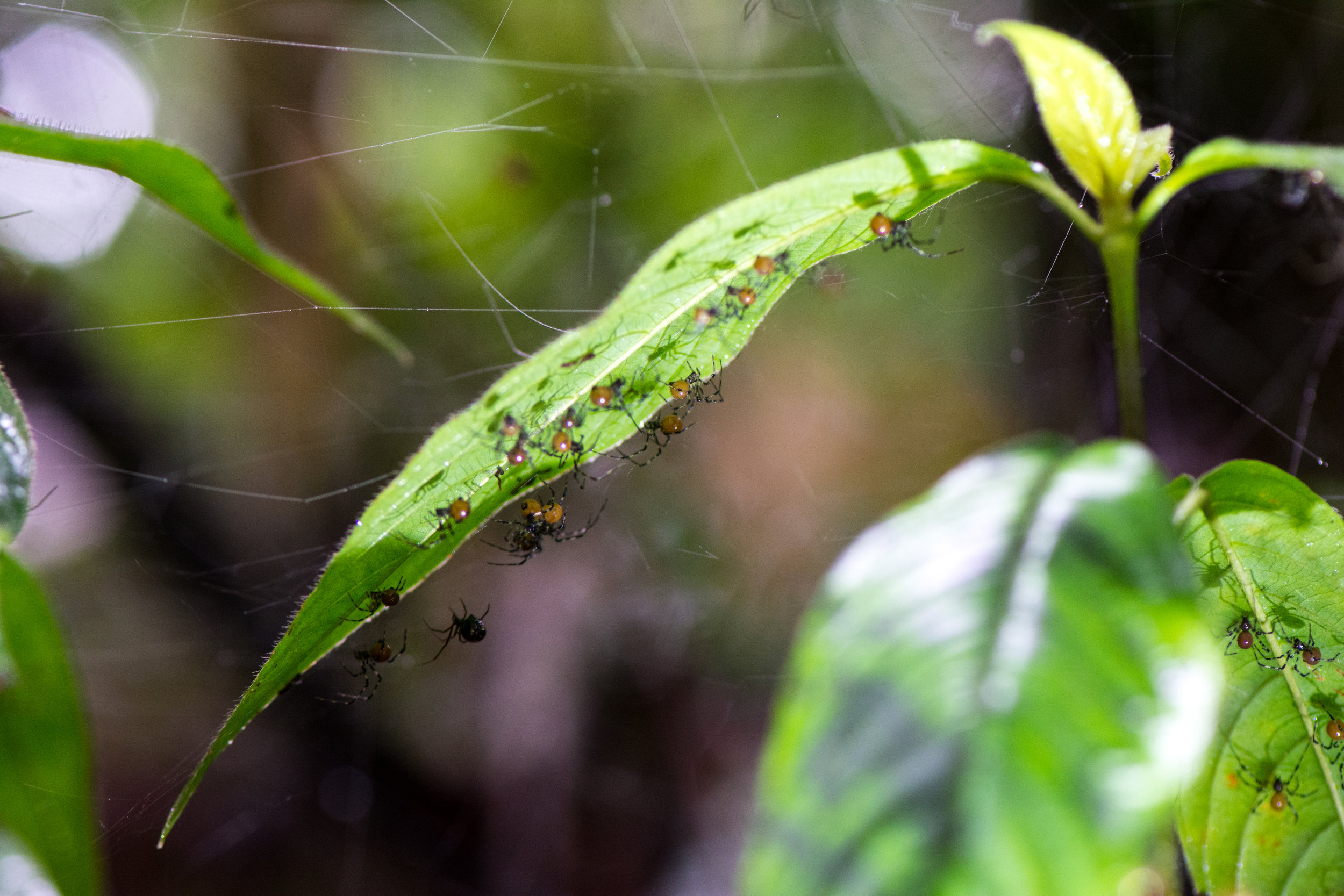 community-spider-eilidh-munro