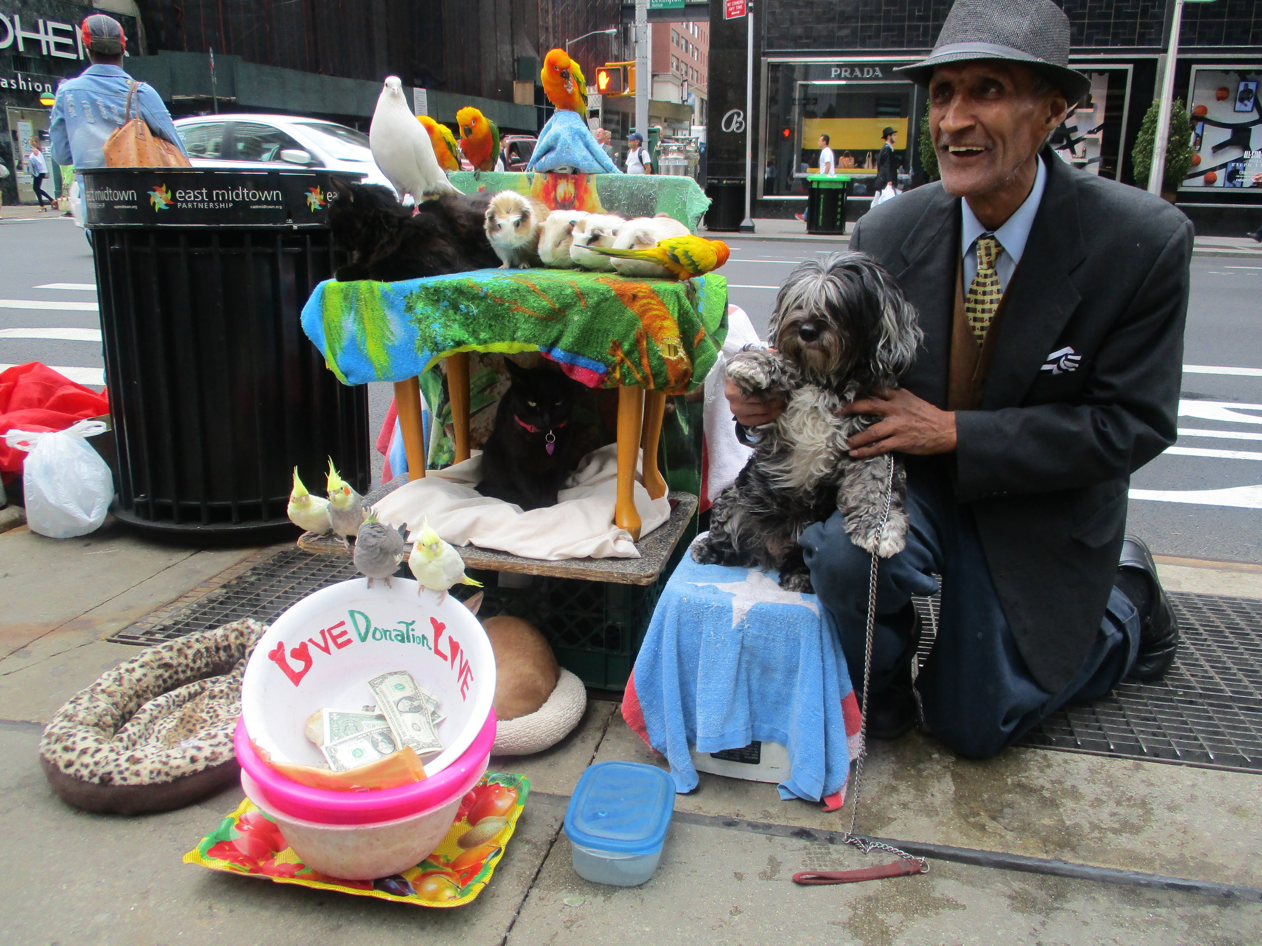 Unknown street performer with his parrot show at 59th Street and Lexington Avenue, 2017