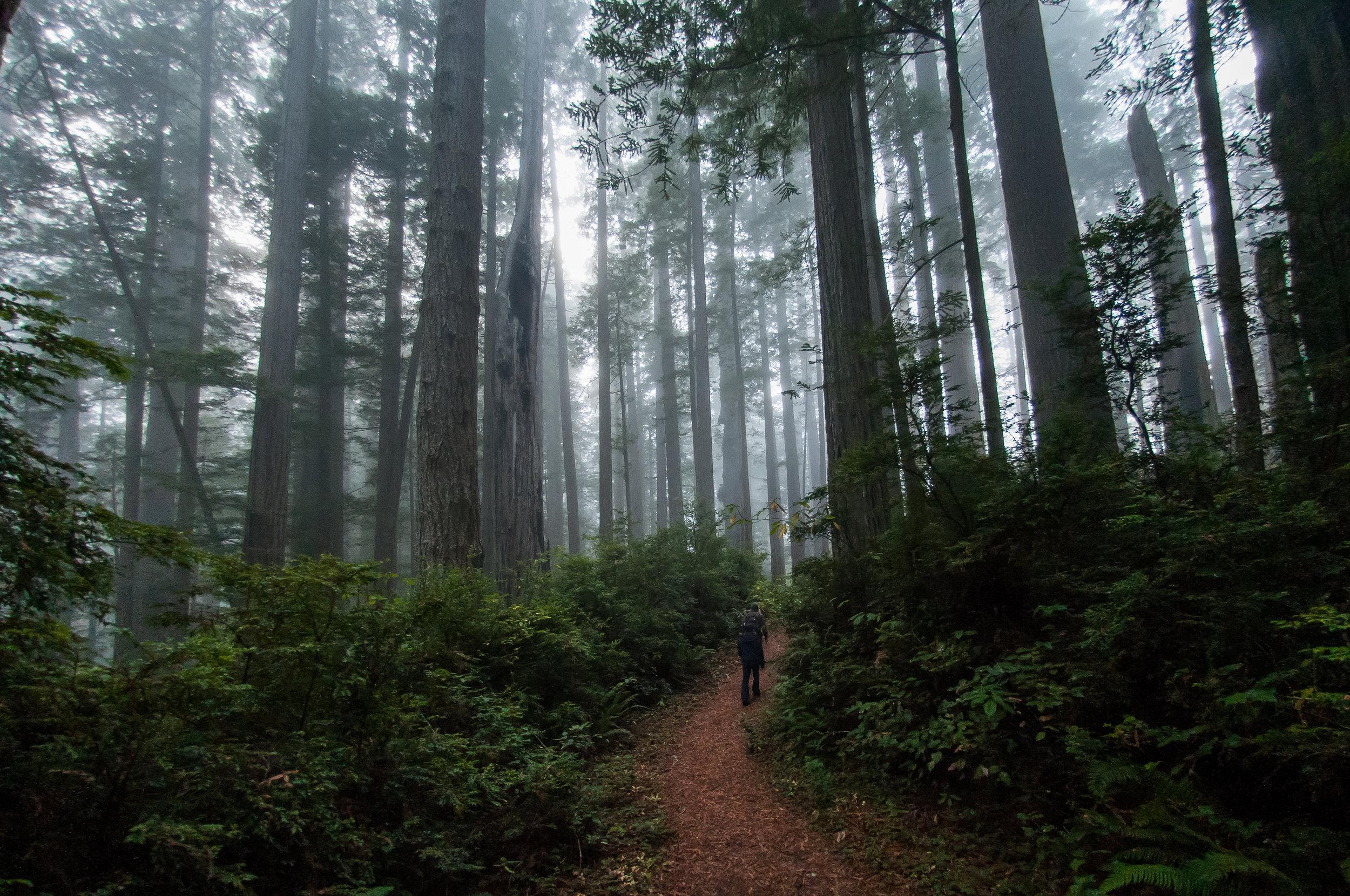 Redwoods-56.jpg