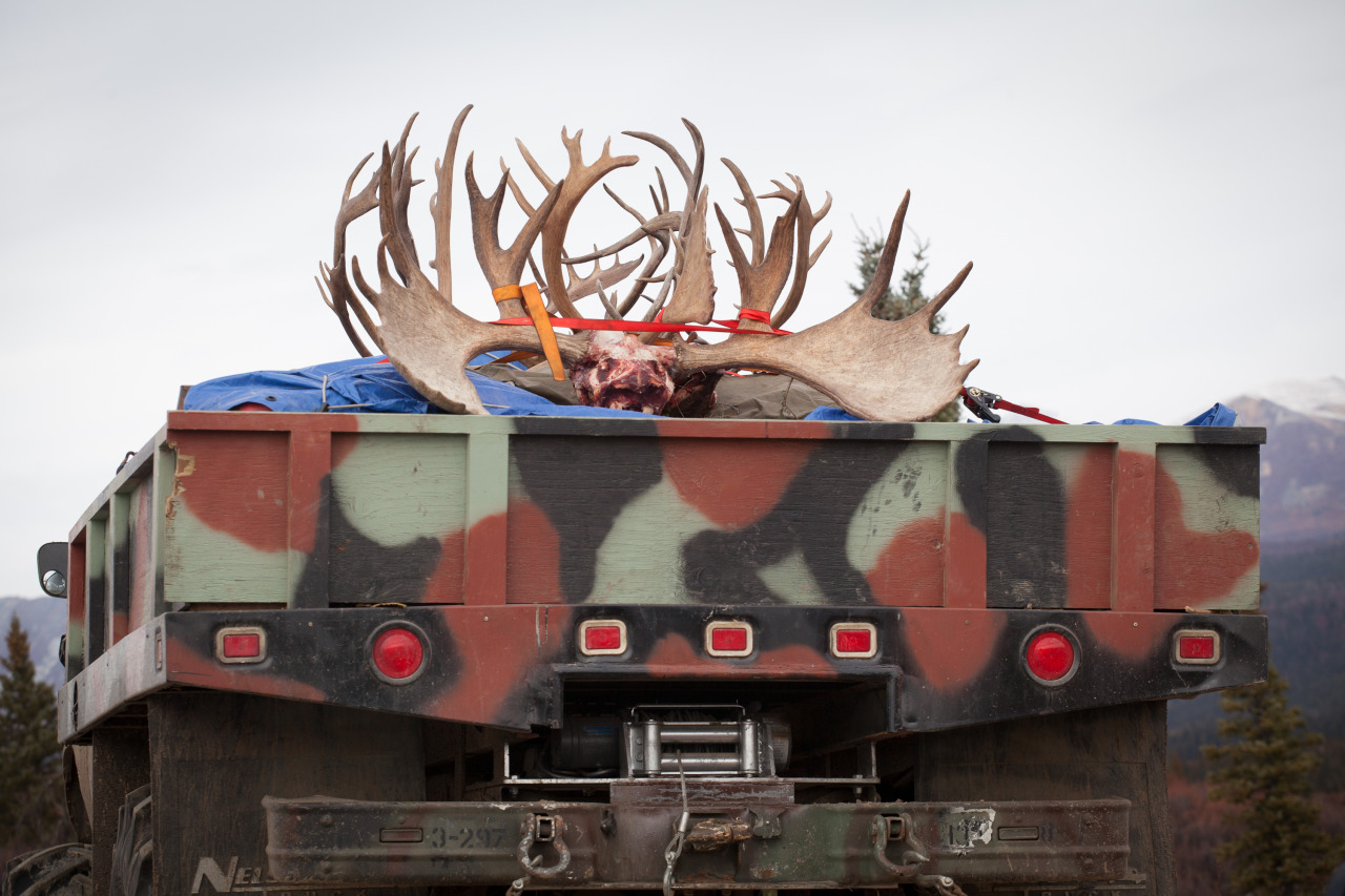 Hunters' bounty seen along the Denali highway, an area dense in wildlife
