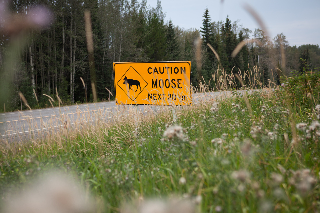 Moose warning on the road, somewhere in the Yukon Territory