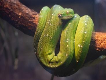 Snake evil.jpg