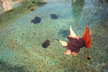 Leaf Adrift.jpg