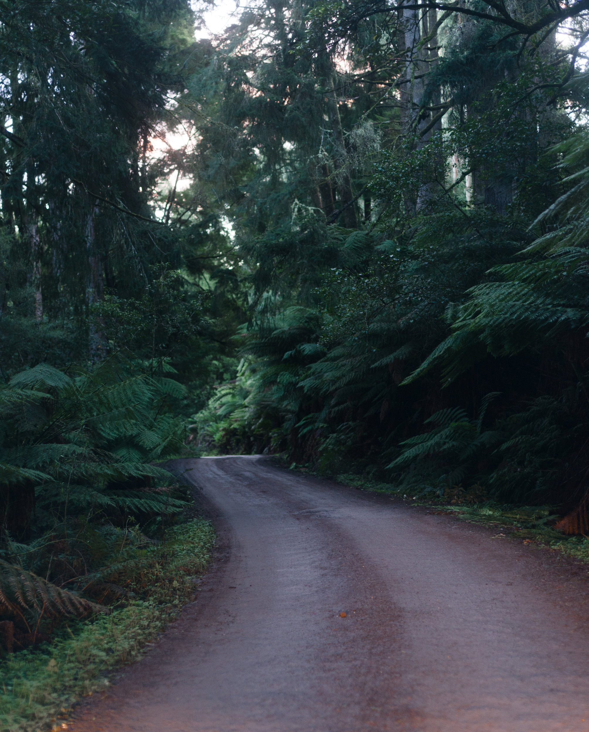 beech forest road vic