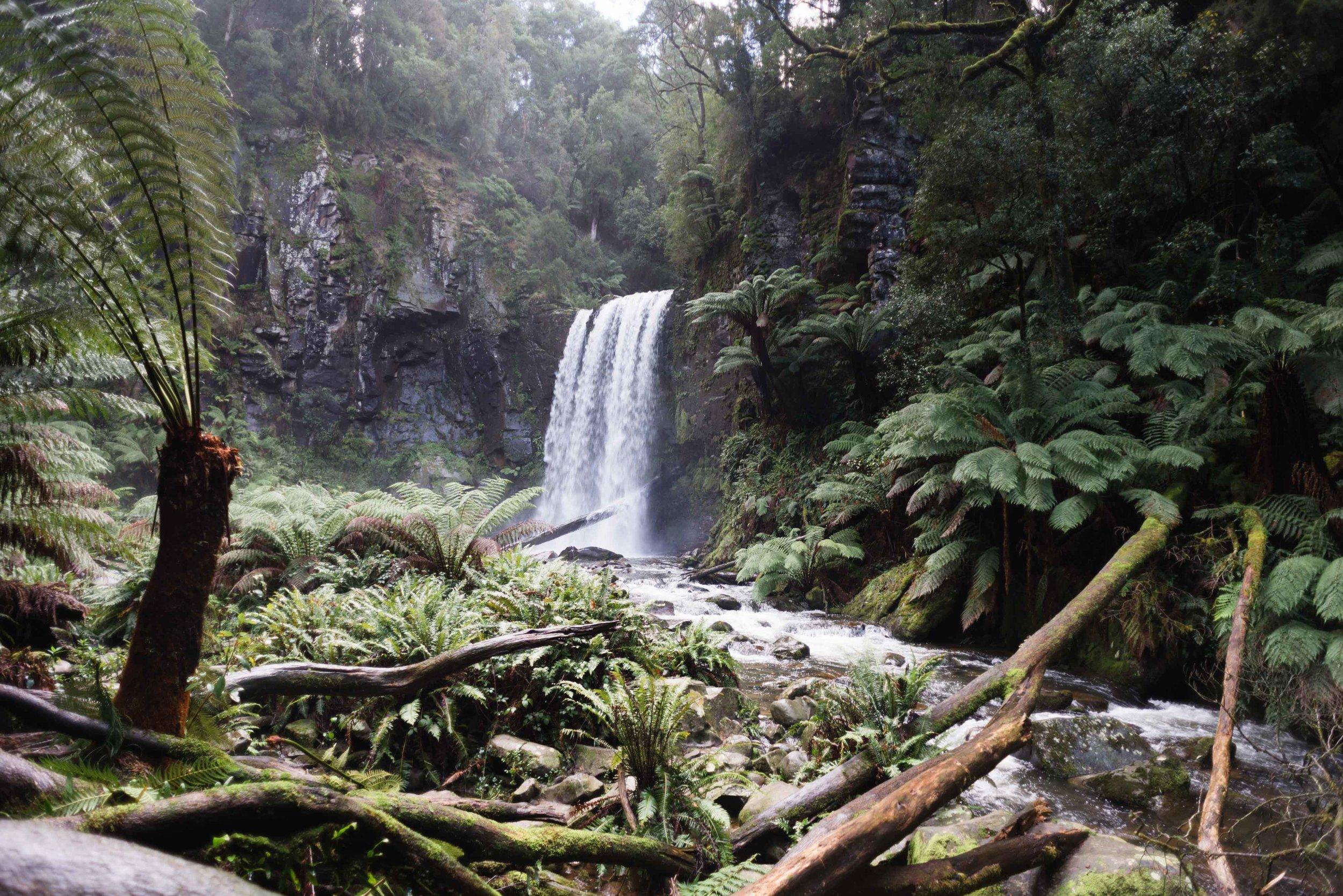hopetoun falls victoria beech forest